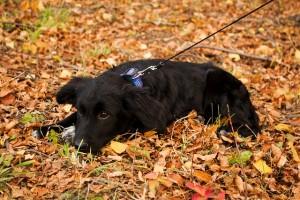 puppy-985366_640