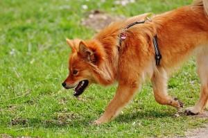 dog-1305362_640