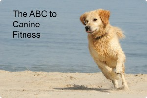 ABC Canine Fitness