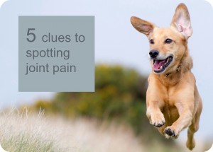 5 clues to spotting joint pain